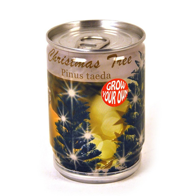Cultiva tu propio Arbol de Navidad